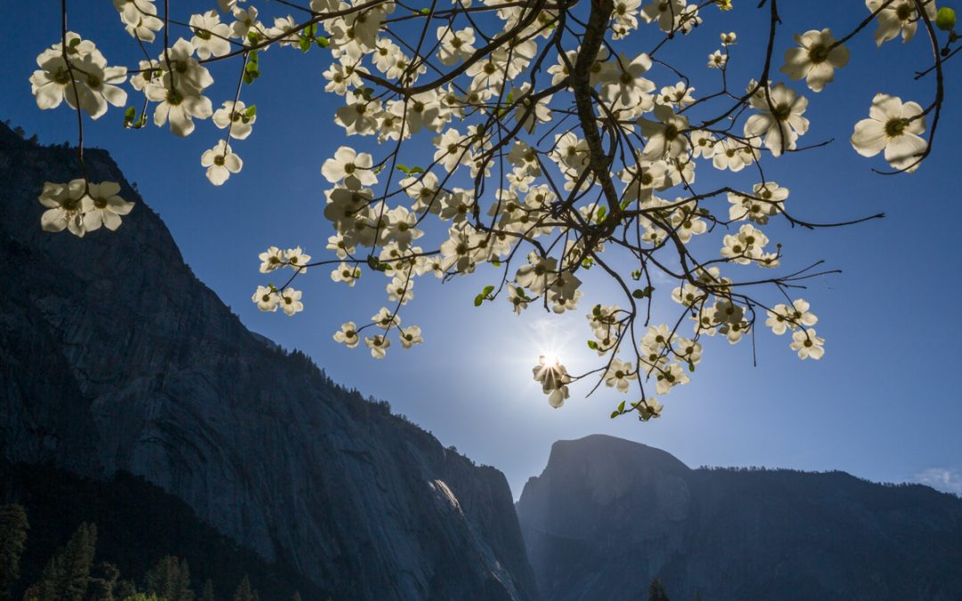 """TEN YEARS IN YOSEMITE"" AT VIEWPOINT PHOTOGRAPHIC CENTER"
